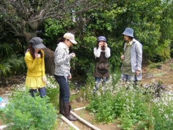 mitaka-herb2011