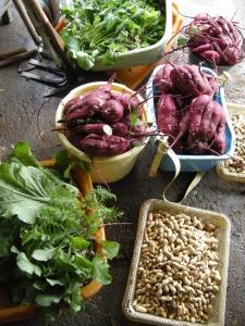 2012秋の収穫