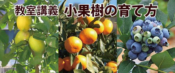 教室講義 小果樹の育て方